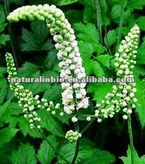 Black cohosh Extracts 2.5%triterpene glycosides