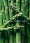 2012 Hot sale chinese fresh asparagus