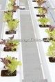 Pvc cultivo sin suelo canal