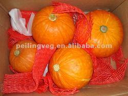 2013 fresh big pumpkin For sale