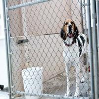 hot dip zinc dog kennels