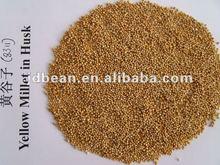 Good Yellow Broom Corn Millet