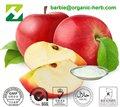 apple vinagre de sidra