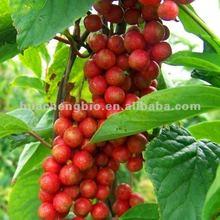 Chinese Herb Schisandra Extract