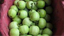 new crop fresh green tengmu apple