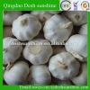 new crop white garlic price 2012