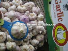 2012 Fresh Garlic Producer