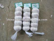 China Jinxinang/ Pizhou/Laiwu Garlic Production 2012