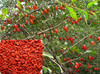 Hot sale Ningxia dried goji berry 180,280,380,500,580,680,750 per 50g