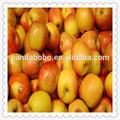 Royal Gala Gala apple para Sir lanka / Bangladesh maçã vermelha / tailândia