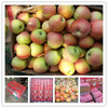 Sweet red fresh gala apple in high quality in wholesale price for sale
