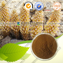 Natural Cistanche Extract Herb Medicine