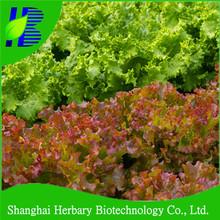 Price for romaine lettuce seeds/red wave lettuce seed/purple Leaves lettuce