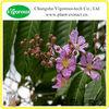 Herbal medicine Banaba extract/Banaba powder for sale/100% natural Banaba extract powder