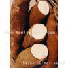 Cassava Piece