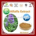 Fonte da fábrica 100% natural de flavonóides de folhas de alfafa extrato