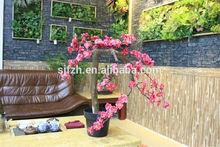 2014 hot sale bonsai,bonsai plants