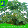 2014 Hot sale red lady papaya seeds for planting