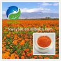 Extrato de calêndula zeaxantina 10%- 20% hplc