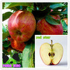 Red Fresh Star Apple Red Chief Apple Delicious Fruit
