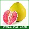 2014 green fruit , fresh Citrus maxima for sale