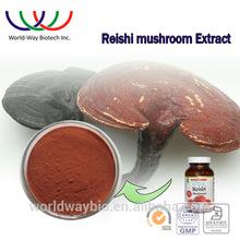 Gmp HACCP casher certifié fabricant hot vente 4% Triterpens 10% polysaccharides rouge reishi extrait