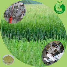 Barley grass juice powder organic barley grass powder barley grass powder