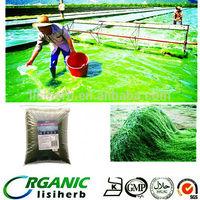 Manufacturer Natural Food Grade Spirulina Powder / 100% pure spirulina powder / spirulina powder for animals feed