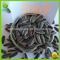 nuevo chino barato sin cáscara gigante comestible de las semillas de girasol