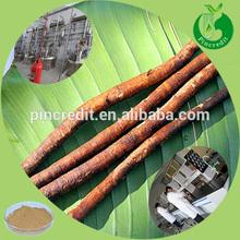 High quality burdock root extract for burdock root tea