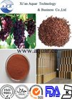 Best quality 95% OPC Grape Seed Extract for Healthcare and Nutritional Supplement