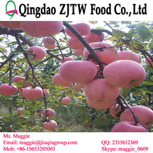 Chinese apple fruit import apple fruit