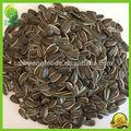 chinês 2014 granel novo preto curto baixo sementes de girassol preço melhor sem sal gigante de sementes de girassol