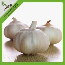 snow white garlic in carton box