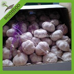 wholesale garlic price in China