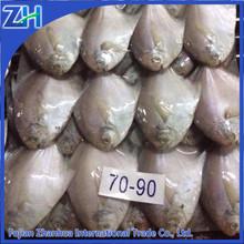 new wholesale fish seafood frozen white pomfret fish food hot sale