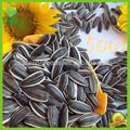 amontonadas de exportación diferentes tipos de semillas