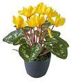 De alta calidad 36cm plantas artificiales casa árbol/jardín/parqueinterior& al aire libre decoración artificiales plantas amarillo