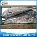 Frozen mer pris Mahi Mahi poissons