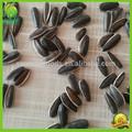 cinese buona la raccolta di semi di girasole
