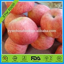 New Corp Fresh Apple / Red Fuji Apple / China Fuji Apple