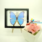 """FOUSEN(039 Random Species) Nature&Art 8"""" (double glasses) framed butterfly"""