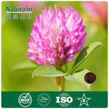 High quality red clover herb extract