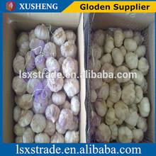 natural normal white garlic/ red garlic/ purple garlic
