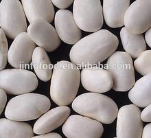Square White kidney bean