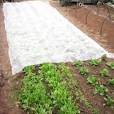 1%-3% UV Treated Agriculture Spunbond Nonwoven Fabric Garden Fleece/ Weed Control/ Ground Cover Sheet