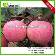 Chinese Fresh Bulk Fuji Apple Fruit From China Factory