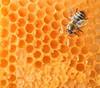comb honey for sale\pure natural bee honey\honey croatia
