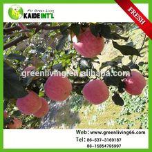 Red Mature Fuji Apple Fruit