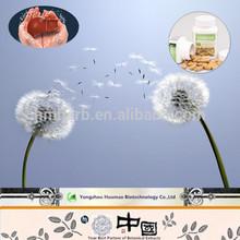 food grade/ top purity/Dandelion Extract/KOSHER HACCP